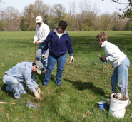 Photo of volunteers planting shrubs.