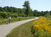 Photo of bicyclist riding on trail past flowers