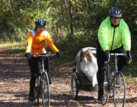 Photo of dog in cart behind a bicycle